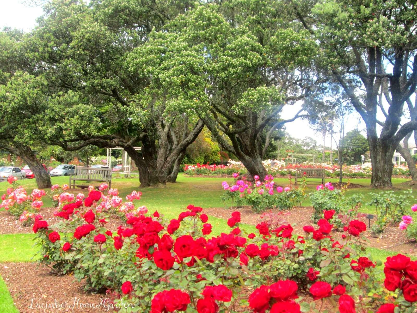 rosas no jardim de deus : rosas no jardim de deus:Convido você a passear comigo num jardim somente de rosas. Se estiver