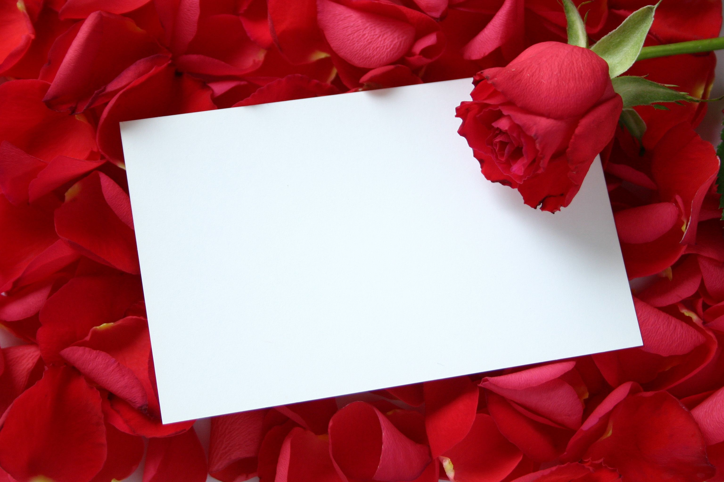 Fondos De Rosas Rojas Para Postales Y Tarjetas and post Fondos De ...